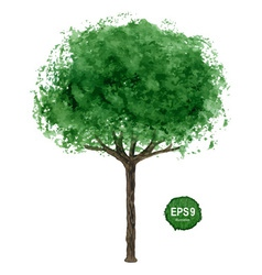 Green tree isolated on white vector image