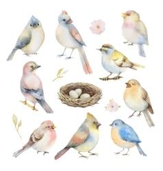 Watercolor set of birds vector image vector image
