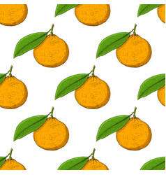 mandarin orange hand drawn colored sketch as vector image vector image