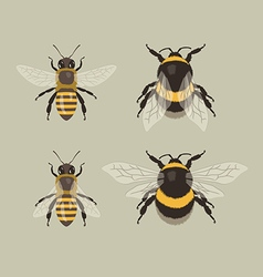 Bee and Bumblebee vector