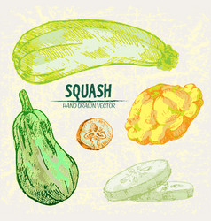 digital detailed line art color squash vector image