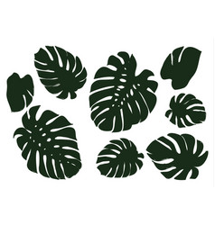 Monstera leaves of a tropical plant sketch black vector