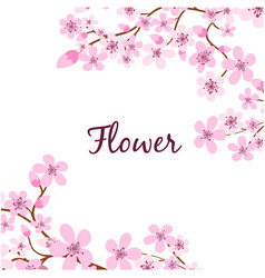 sakura branch flower pink background image vector image