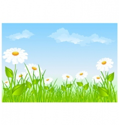 field of daisies vector image