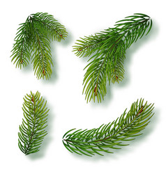 christmas tree branches set for a decor vector image