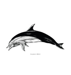 dolphin hand drawing vintage engraving clipart vector image