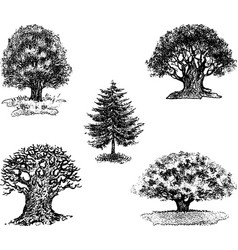 Drawings of different trees vector