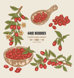 hand drawn set of goji berries colored sketch vector image
