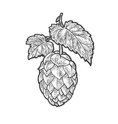 hop cone sketch vector image