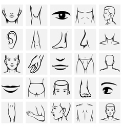 Male body parts icons set vector