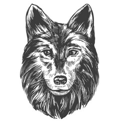 Muzzle of a wolf wildlife hand drawn vector