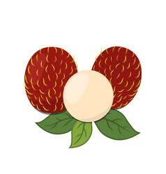 Rambutan tropical fruit exotic vitamin nutrition vector
