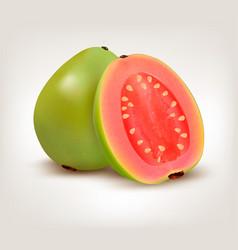fresh green guava fruit vector image vector image