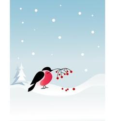 Bullfinch bird on winter background vector