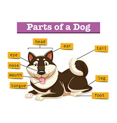 Diagram showing parts of dog vector
