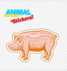 Farm animal pig or pork in sketch style vector