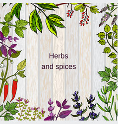 frame with hand drawn culinary herbs and spices vector image
