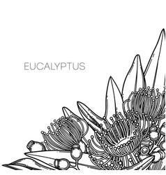 Graphic eucalyptus flowers and leaves vector