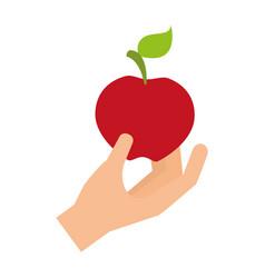 hand holding fresh apple vector image