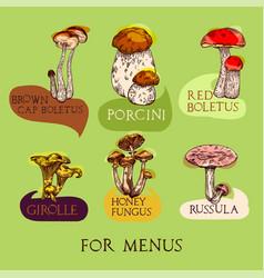 mushroom set vector image