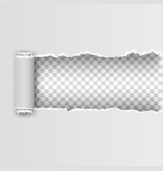 white torn paper with ripped edges vector image