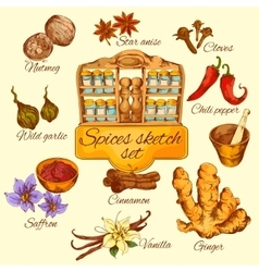 Spices Sketch Colored vector image