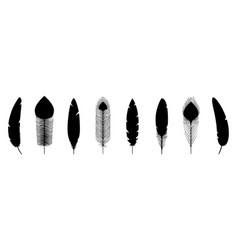 black feathers silhouettes vector image