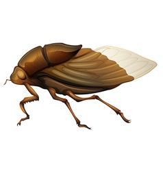 Cicadidae vector