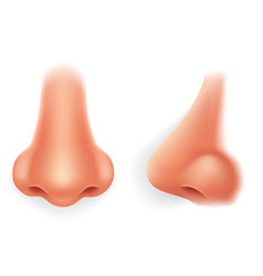 Front profile human nose realistic isolated 3d vector