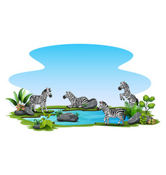group zebra playing in small pond vector image