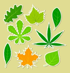 Leaves of different plants vector image