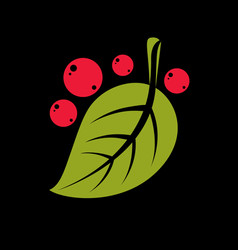 simple green leaf with red seeds of deciduous vector image