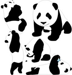 Panda babies silhouettes vector image vector image