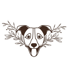Head cute jack russell rerrier dog on white vector