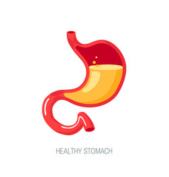 human stomach in flat style icon vector image