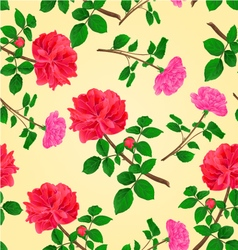 Seamless texture twig red and pink roses vector image