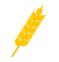 wheat ear icon isolated vector image vector image