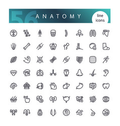 anatomy human body line icons set vector image