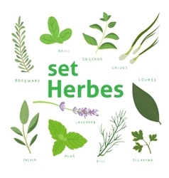 Aromatic herbs set Fresh herbs and spices set vector