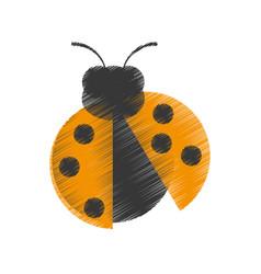 drawing yellow ladybug animal insect garden vector image