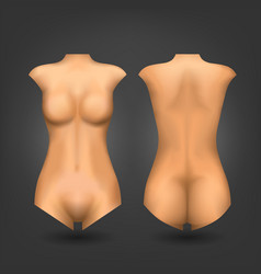 Female dummy or woman naked body vector