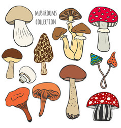 Hand drawn mushrooms collection in color edible vector