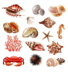 Seashell realistic set vector