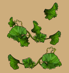 Set of separately drawn green leaves crawling tops vector