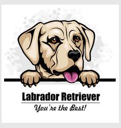 White labrador - peeking dog head dog vector