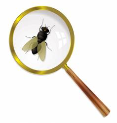 magnify fly vector image