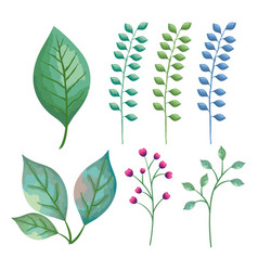 branch with leafs decorative icons vector image