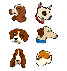 dogs collection - heads vector image