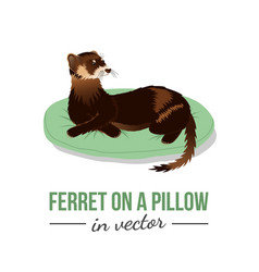 Ferret on a pillow vector