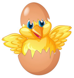 Little chick hatching egg vector